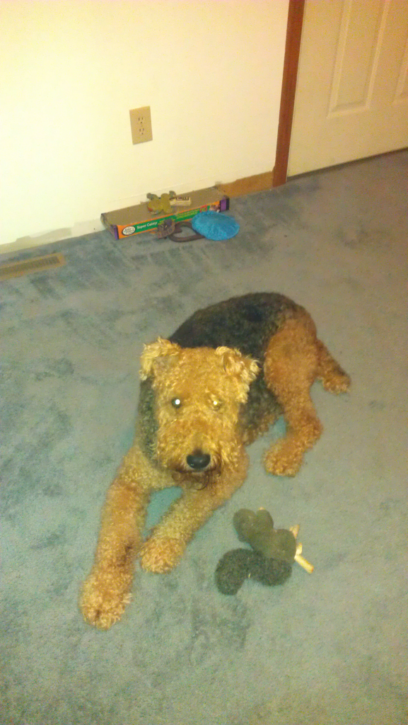 Molly and her toy